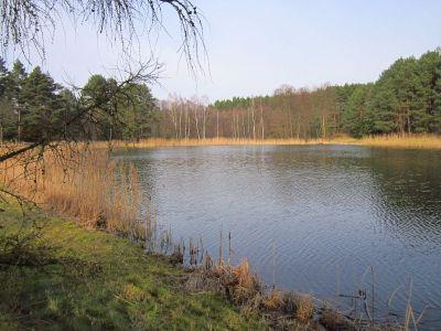 arboretum zielonka