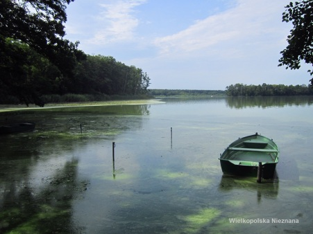 Widok na Jezioro Wolsztyńskie