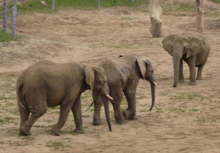 Słoniowa rodzina z Nowego Zoo